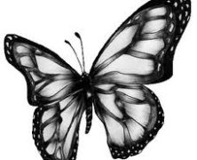 Significance of a Butterfly