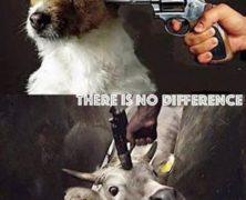 Dog = Cow