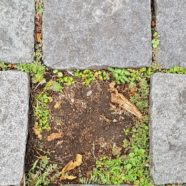 Tile(less) Garden