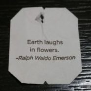 Earth Weeps Too