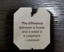 Flowering Weed?