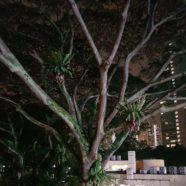 Night Light: Dharmagram #32