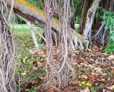 Roots: Dharmagram #125