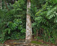 Obelisk: Dharmagram #128