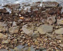 Rock: Dharmagram #164