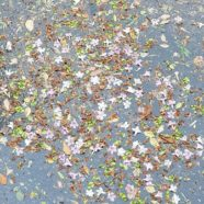 Compost: Dharmagram #284