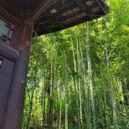 Wood: Dharmagram #290