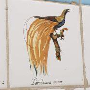 Bird: Dharmagram #317